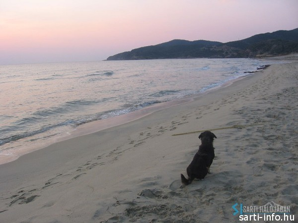 Kormi a tengerparton