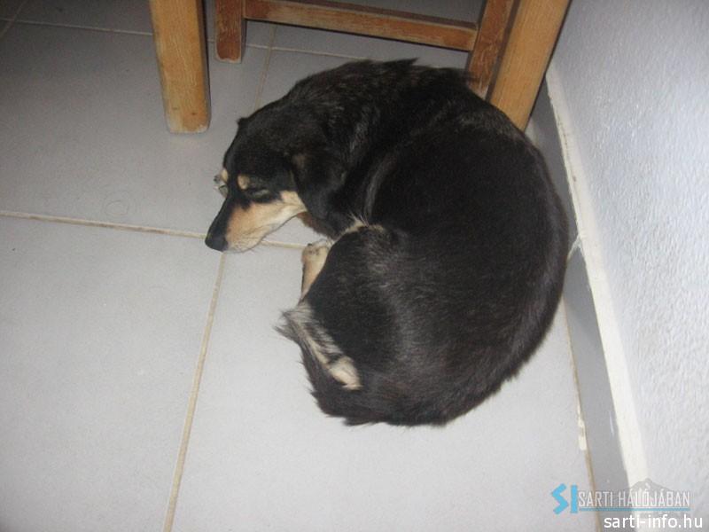 Kormi kutya az asztal alatt