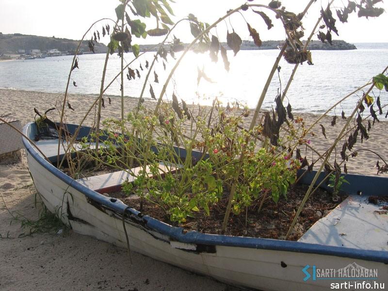 Növények a csónakban