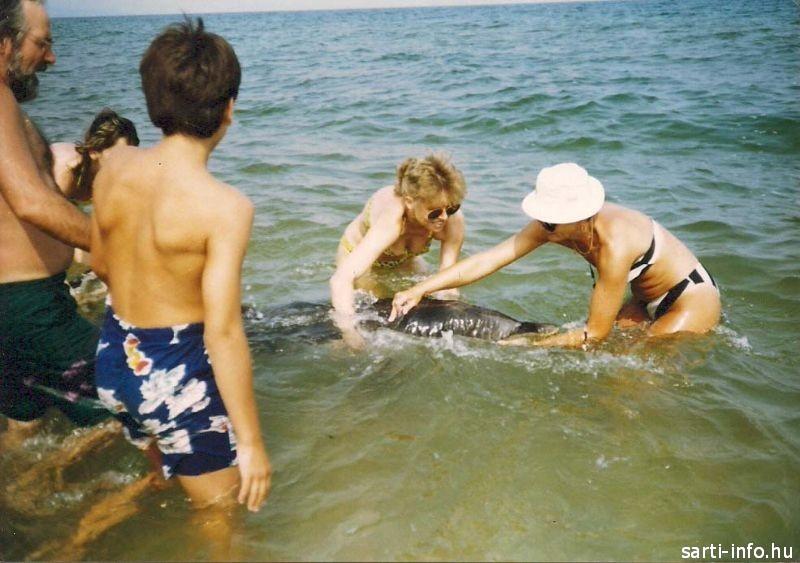 Emberek és a delfin (Görögország delfin mentés)