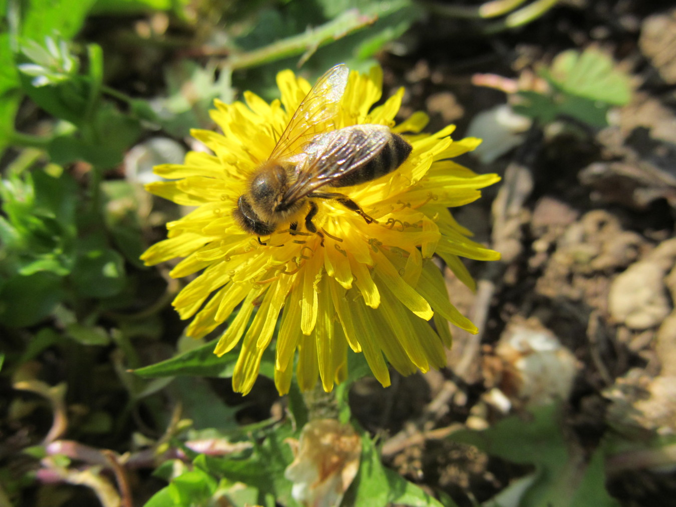 Méhecske (A méhek napja)