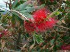 Piros színű növényke