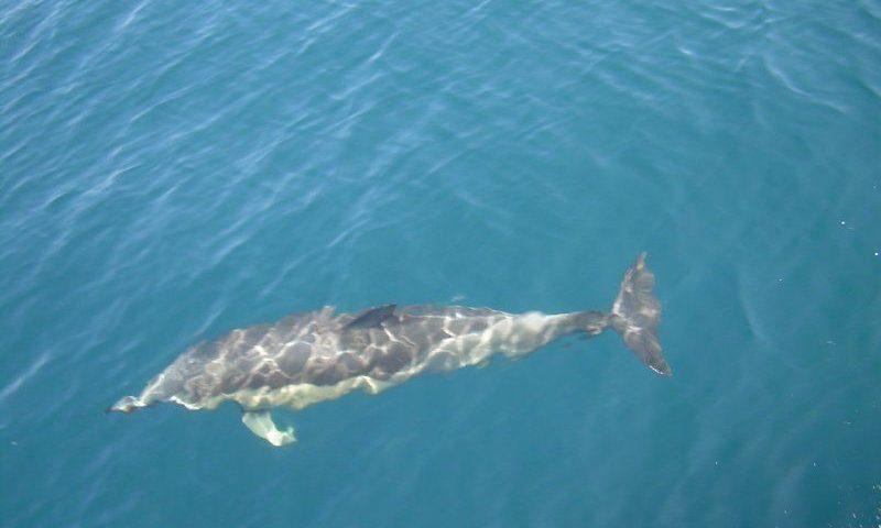 Delfin Sartin