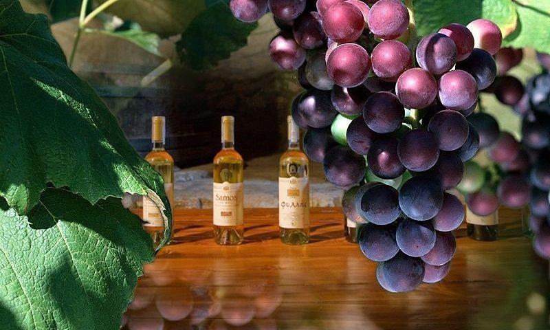 Szamosz borok