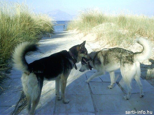 Kutyával Sartin