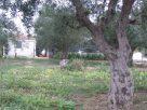 Görögdinnye görög földön