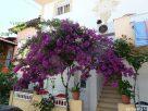 Jellegzetes görög virágok