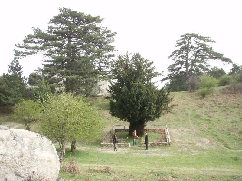 2000 éves Itamos fa