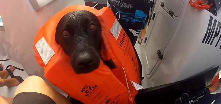 Kira a csónakban