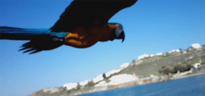 Vito, a híres ara papagáj