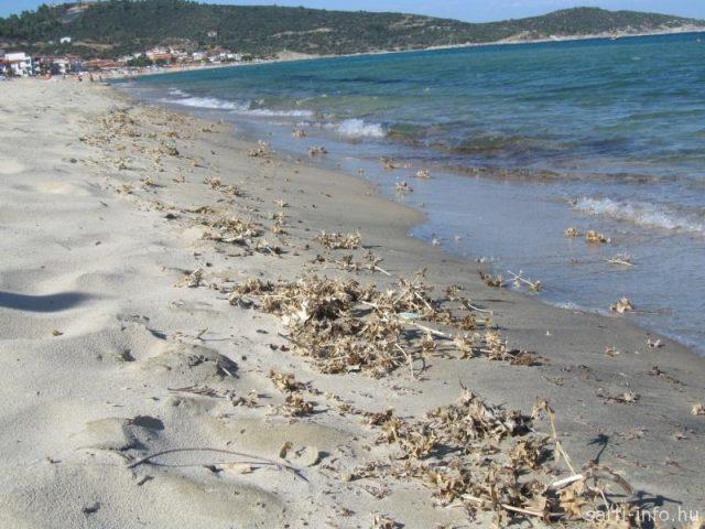 Tüskés tengerpart (Adri & Thomas fotója)