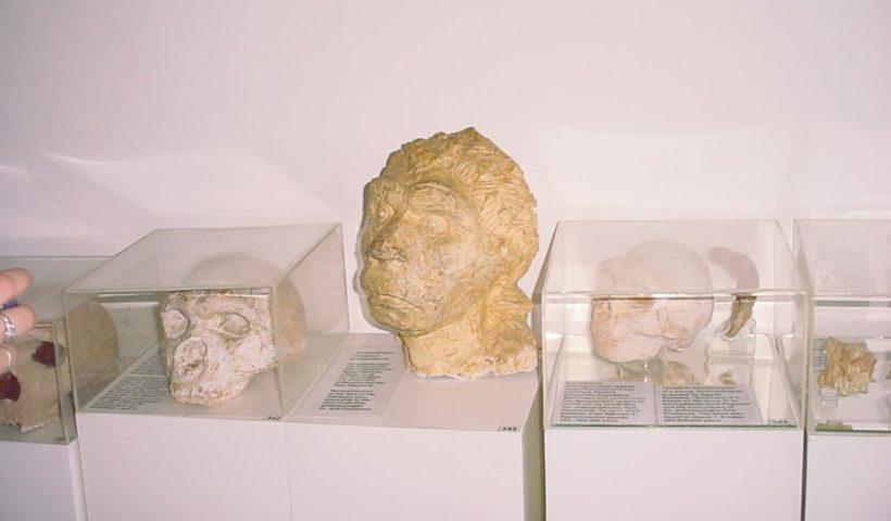 Koponyák a múzeumban