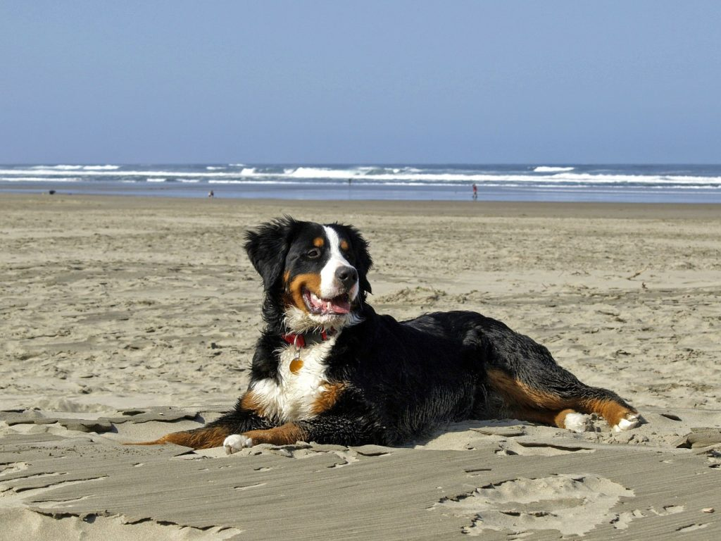 Kutya a tengerparton