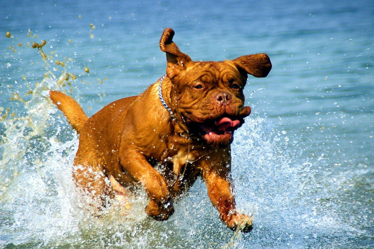 Boldog kutya a vízben (állatbarát strandok)