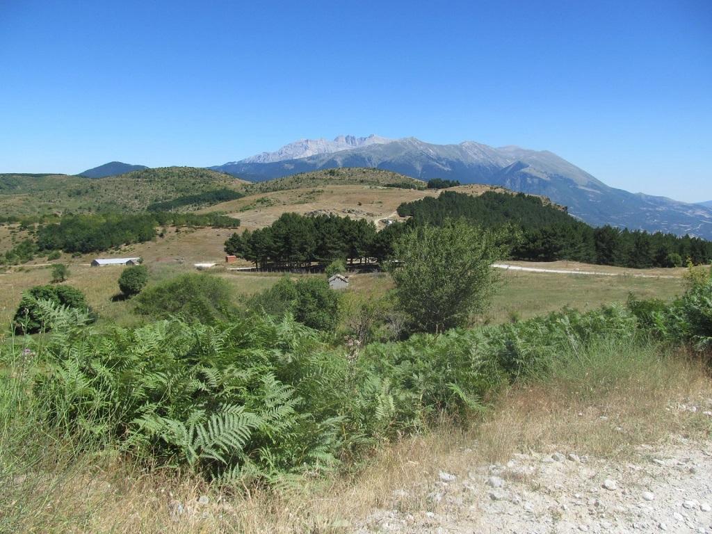 Fenyvesek és páfrányok mellett görög hegyi tea és számos más növény tarkította a tájat.