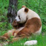 Panda profilképe